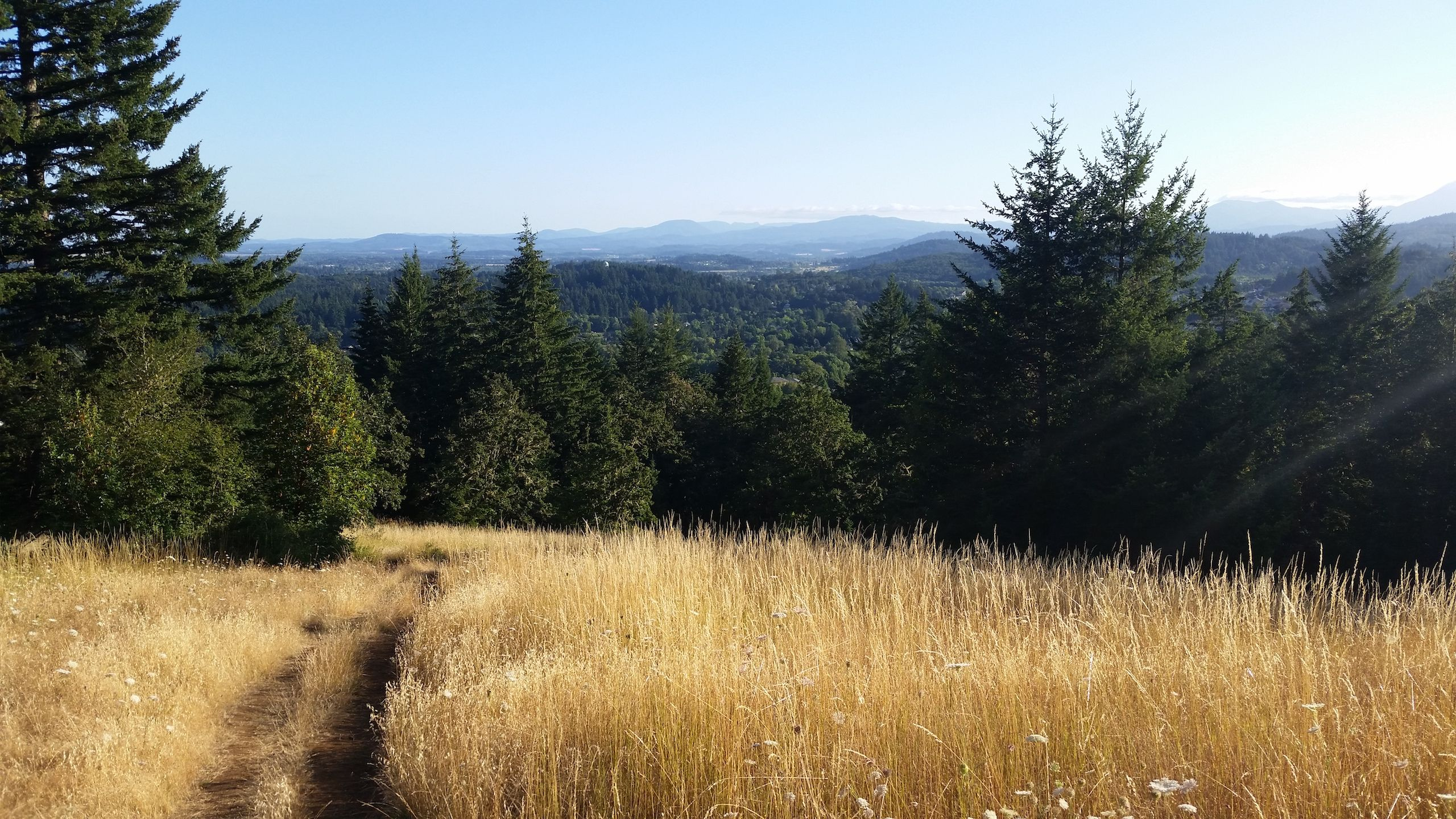 View from the top of Chip Ross Park in Corvallis, OR.